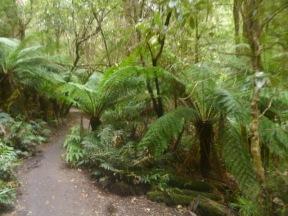 Cape Otway Jungle Walk