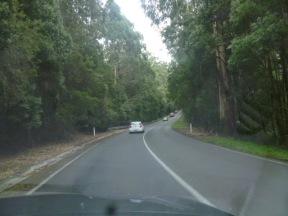 Cape Otway Jungle Drive