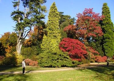 Wikipedia arboretum