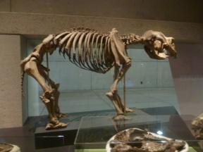 Mammal Fossil