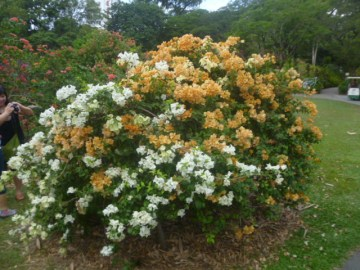 (pic - Story) Singapore Botanic Gardens - Entrance Gardens 02