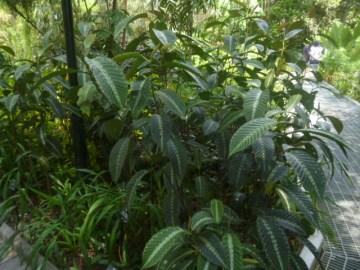 Foilage Garden