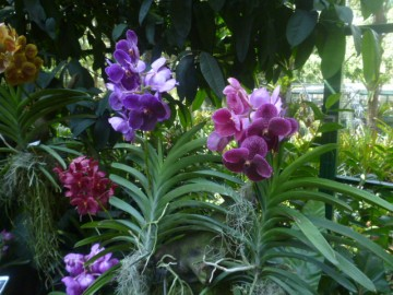 Orchid Gardens