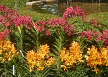 Orchid Garden Flowers
