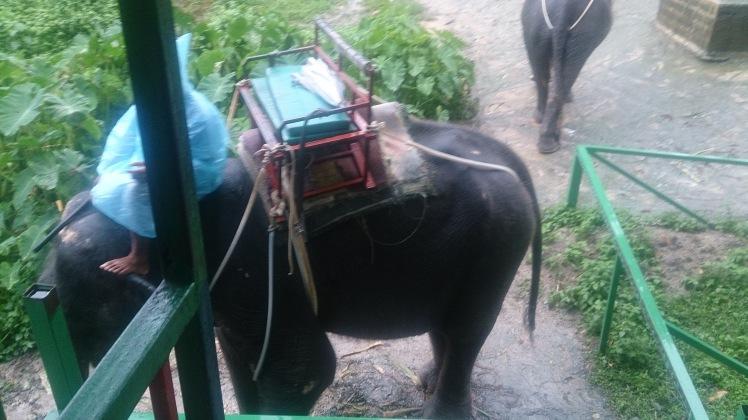 Boarding Elephant