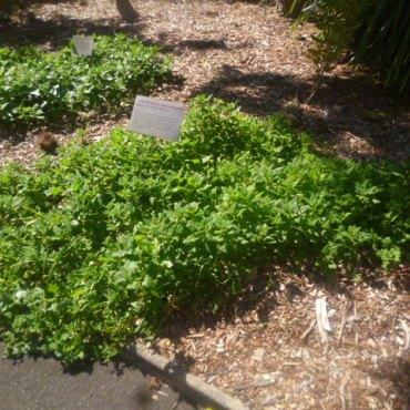 Garden Patch