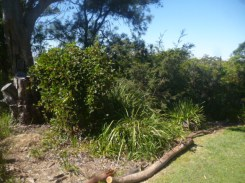 (pic - Story) Drummoyne - Clarkes Point Reserve 06