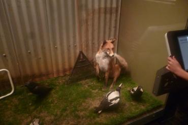 (pic - Story) SA Museum - Backyard 02