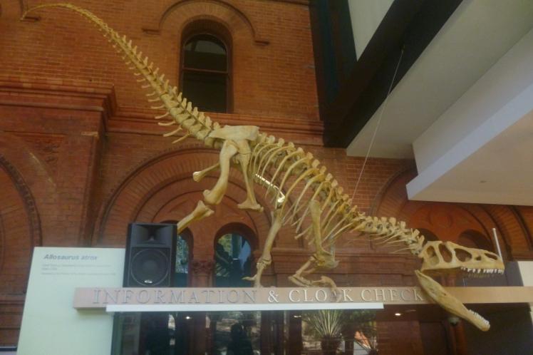 (pic - Story) SA Museum - Dinosaur