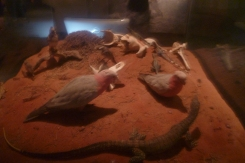 (pic - Story) SA Museum - Native Animals 03