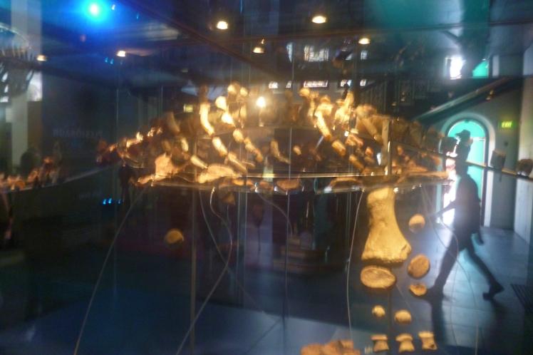 (pic - Story) SA Museum - Opal Dinosaur