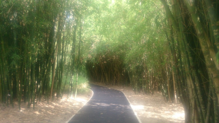 (pic - Story) Adelaide Gardens - Bamboo Forest