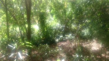 (pic - Story) Adelaide Gardens - Bush Track 01