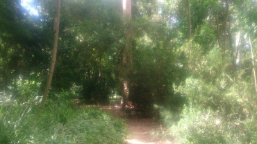 (pic - Story) Adelaide Gardens - Bush Track 02