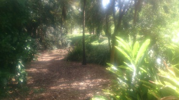 (pic - Story) Adelaide Gardens - Bush Track 03