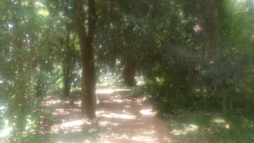 (pic - Story) Adelaide Gardens - Bush Track 04