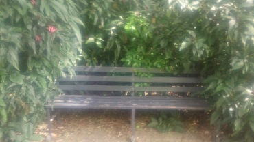 Overgrown Bench