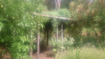 (pic - Story) Adelaide Gardens - Overgrown Bush 01