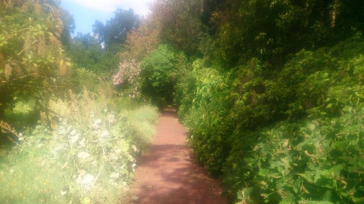 (pic - Story) Adelaide Gardens - Overgrown Bush 02