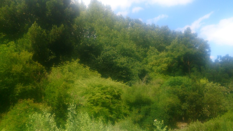 (pic - Story) Adelaide Gardens - Overgrown Bush 03