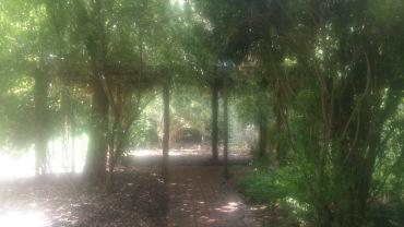 Overgrown Trellis