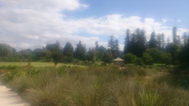 (pic - Story) Adelaide Gardens - Swamp 01