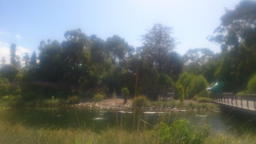 (pic - Story) Adelaide Gardens - Swamp 02