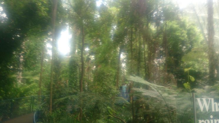 (pic - Story) Adelaide Gardens - Terreium 01