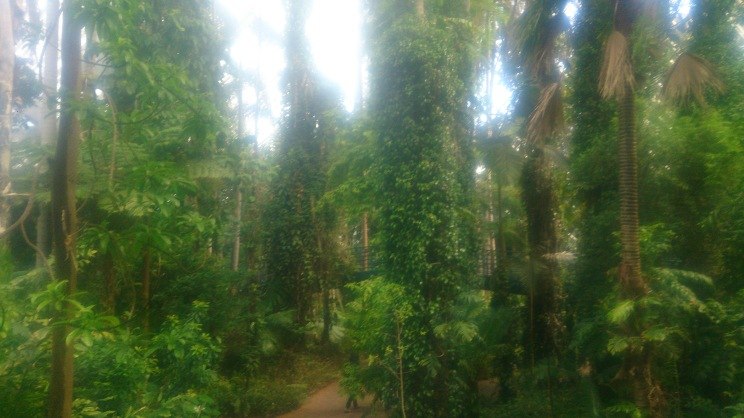 (pic - Story) Adelaide Gardens - Terreium 02