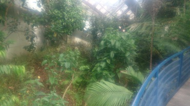 (pic - Story) Adelaide Gardens - Terreium 03