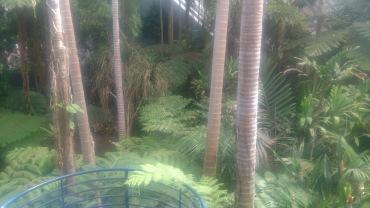 (pic - Story) Adelaide Gardens - Terreium 04