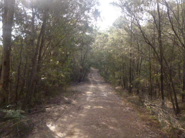 (pic - Story) Gosford Glyphs - Bush Trek