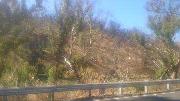 (pic - Story) Gumeracha - Bush Fire 01