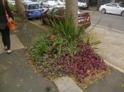 (pic - Story) Paddington - Street Garden 04