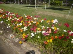 (pic - Story) Parramatta - Wisteria Gardens 03