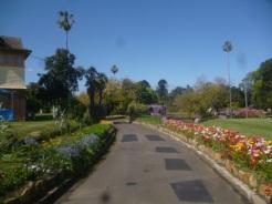 (pic - Story) Parramatta - Wisteria Gardens 04