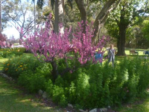 (pic - Story) Parramatta - Wisteria Gardens 09