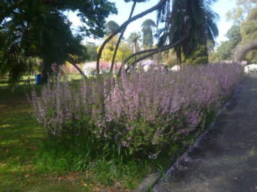 (pic - Story) Parramatta - Wisteria Gardens 11