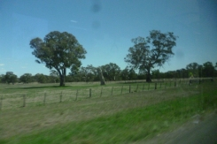 (pic - Story) Whittlesea - Farmland 03