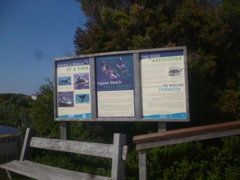 (pic - Story) Warnambool - Logans Beach 01