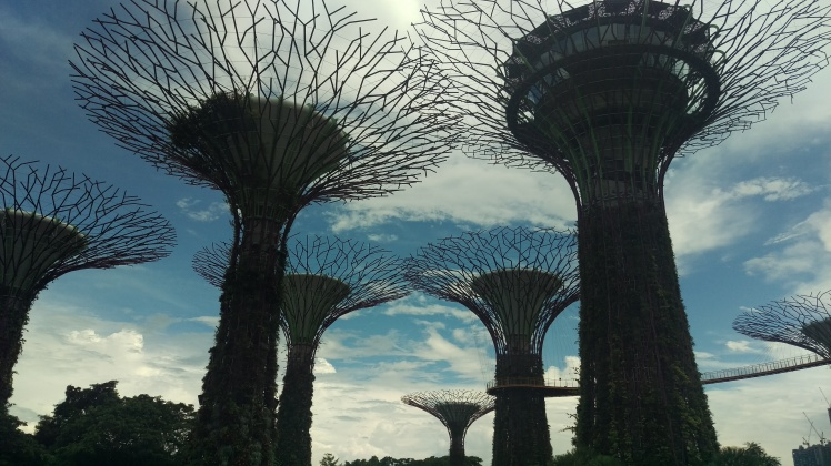 (pic - Story) Gardens - Supertrees