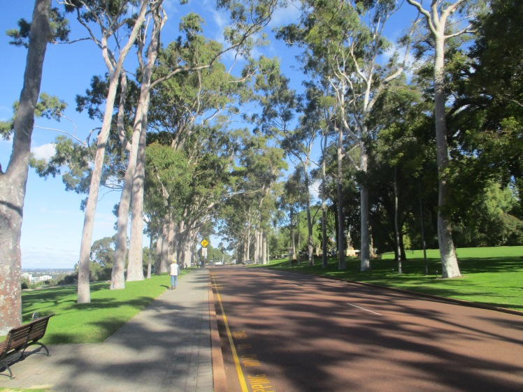 (pic - Perth) Kings Park - The Avenue