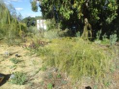 (pic - Story) Kings Park - Botanic Gardens 04