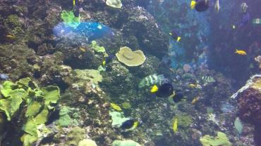 (pic - Story) Sentosa - Fish 01