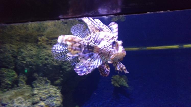 (pic - Story) Sentosa - Fishie