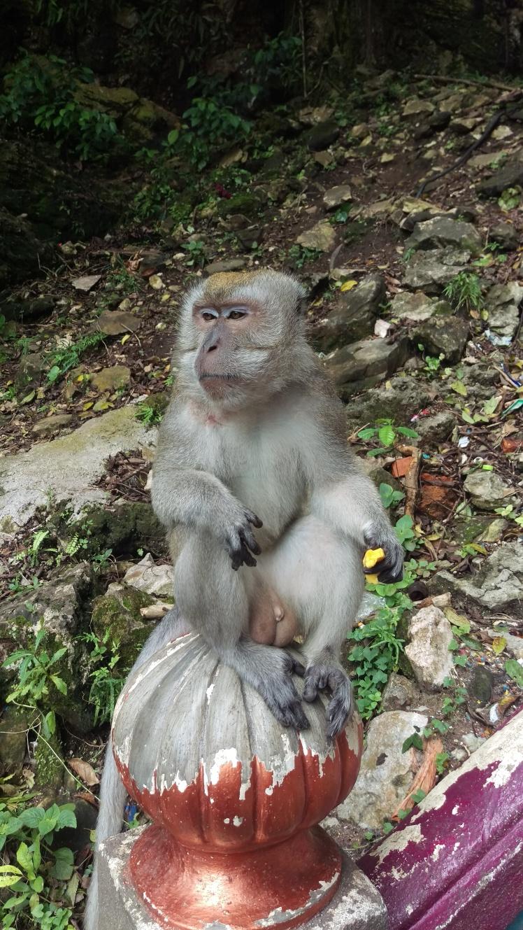 (pic - Story) KL - Monkey