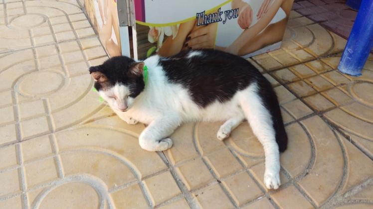 (pic - Story) Phi Phi - Cat 01