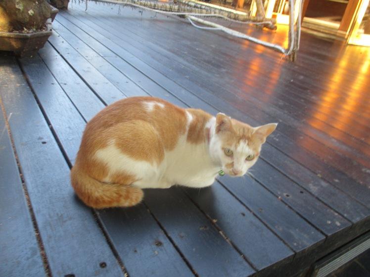(pic - Story) Phi Phi - Cat 04