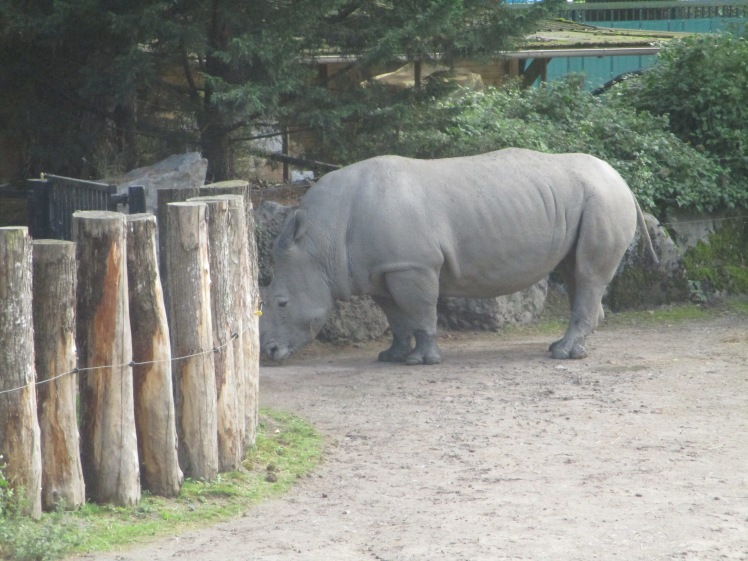 (pic - Story) Lille - Rhino